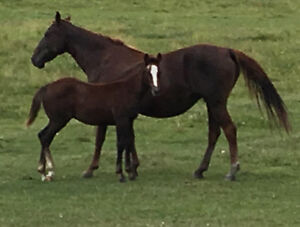 Colts & or Bred Mare