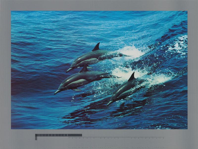 POSTER : ANIMAL : CELEBRATION  - DOLPHINS  - FREE SHIPPING !              RW16 F