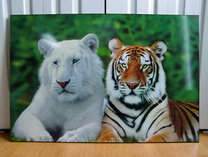 Laminated Picture/plaque – Tiger poster