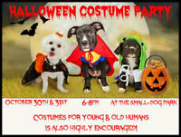 Halloween Costume Party Night(s) for Small-Dogs!