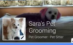 Sara's pet grooming Kadina Copper Coast Preview