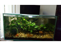 FANTAIL GUPPIES FOR SALE WITH TANKS.