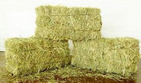 SMALL SQUARE HAY BALES (CUT 3 WEEKS AGO) X 20
