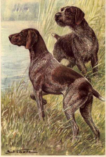 German Short / Wirehaired Pointer - MATTED Dog Art Print / NEW U