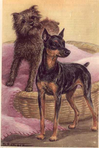 Miniature Pinscher - MATTED Dog Print - German  NEW U