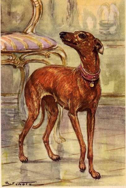 Italian Greyhound - MATTED Dog Art Print - German / NEW U