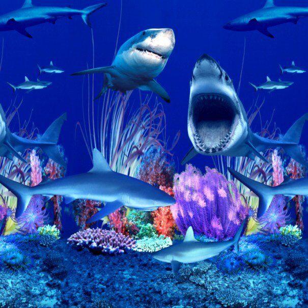 SHARK NATION - OVERLAP Above Ground Pool ...