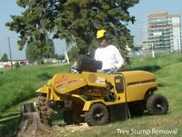 TREE STUMP REMOVAL - STUMP GRINDING