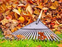 LEAF Raking and Bagging (Oakville) -- Very Cheap