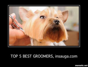 Full and Part Time Dog Groomers Wanted