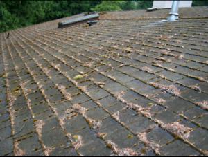 Remove the moss before the rainy season hits!