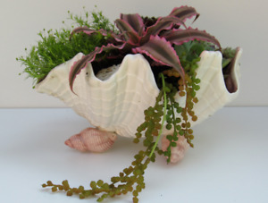CERAMIC SHELL PLANTER (Rustic-Charm Mississauga)