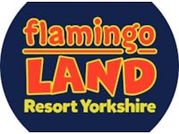 Flamingo land ticket