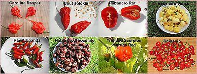 8 Sorten Chili Samen Superhot Carolina Reaper, Bhut Jolokia Moruga Habanero je10 Carolina 8