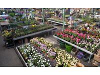 Garden Centre Till assistant weekends