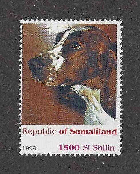 Dog Art Head Portrait Postage Stamp WELSH SPRINGER SPANIEL Somaliland 1999 MNH