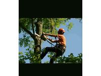 Local tree surgeon