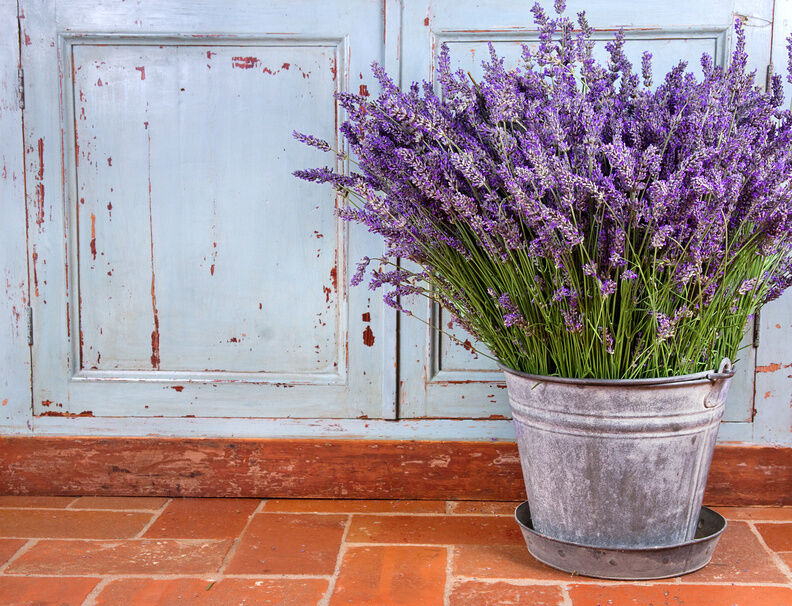 How to Use Decorative Buckets in a Garden