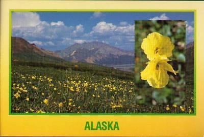 (wah) Denali National Park: Colorful Wildflowers ()