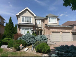 84 Wild Orchid Cres, Markham  (House For Rent)