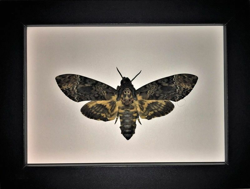Butterfly Art Designs and Taxidermy