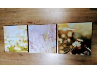 3 x square WALL ART canvas flower photos / pictures from NEXT