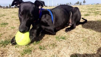 Melbourne Pet House Sitting, House Visits & Dog Walking