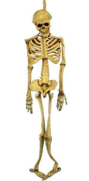 human skeleton bones ebay rh ebay com human skeleton worksheet skeleton human body bones diagram in - Skeleton Worksheet