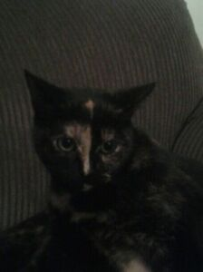 2 year old cat looking for a good home.  Kitchener / Waterloo Kitchener Area image 2