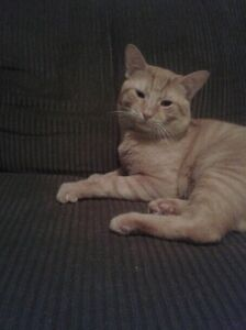 1 year old male cat looking for new home.