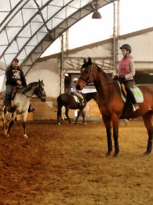 WESTERN RIDING LESSONS AVAILABLE IN WELLAND