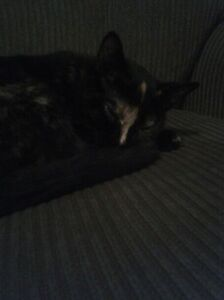 2 year old cat looking for a good home.  Kitchener / Waterloo Kitchener Area image 3
