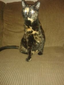 2 year old cat looking for a good home.  Kitchener / Waterloo Kitchener Area image 1