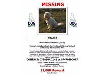 REWARD !!!!White dog missing from Gullane beach 8 December