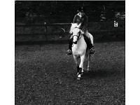 Super Family Dartmoor Pony