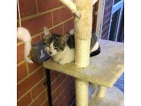 Ruby adorable Kitten cat