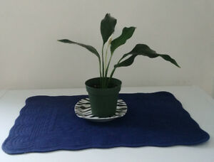 Healthy rooted Peace Lily