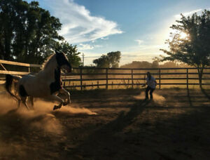 Offering horse training, lessons and riding to build confidence.