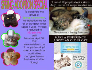 SAFE Team Rescue Shelter MEET YOUR PURRFECT MATCH