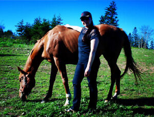 Chestnut Thoroughbred mare for sale
