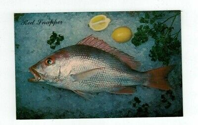 Vintage Animal Post Card Red Snapper Fish on Ice with Lemons