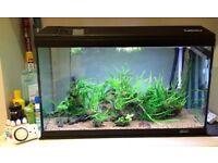 130L complete auqarium tropical fish tank setup