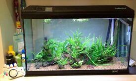 130L aquarium complete planted tropical fish tank setup
