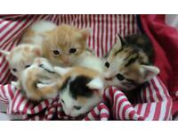 5 Kittens £150 each