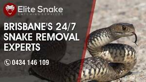 Snake Catcher & Removal Brisbane - Elite Snake Catching Services Wynnum West Brisbane South East Preview