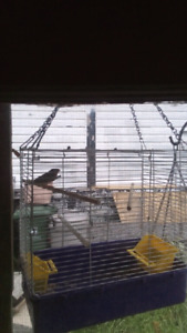 Finch and cage