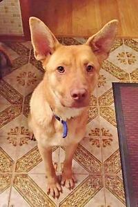 """Young Male Dog - Mixed Breed: """"Zoomer"""""""
