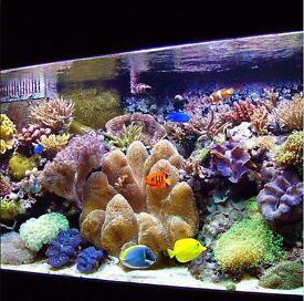Natural Sea Water(Marine Seawater for Establishing a Healthy Aquarium)