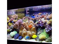 Natural Sea Water(Marine Seawater for Establishing a Healthy Aquarium)