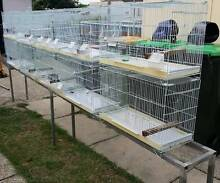 Bird Breeding Cages for Budgie,Canaries or Finches Bankstown Bankstown Area Preview